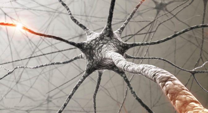 Renovar células viejas de forma natural? Se puede!