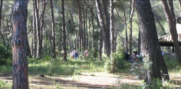 Picnic en Marbella! GRATIS y de LUJO!!
