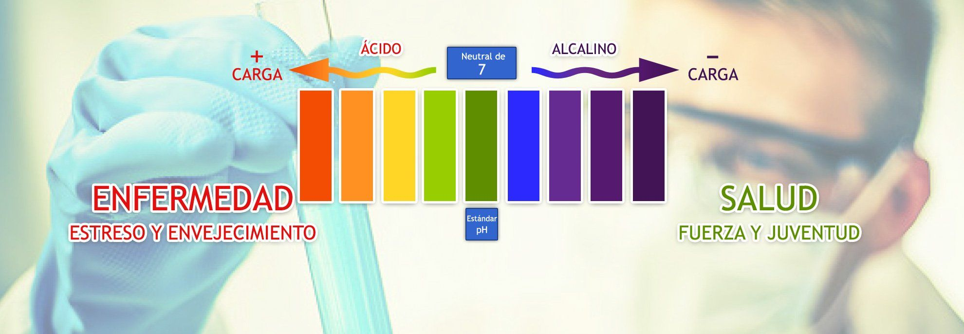pH acido o alcalino?